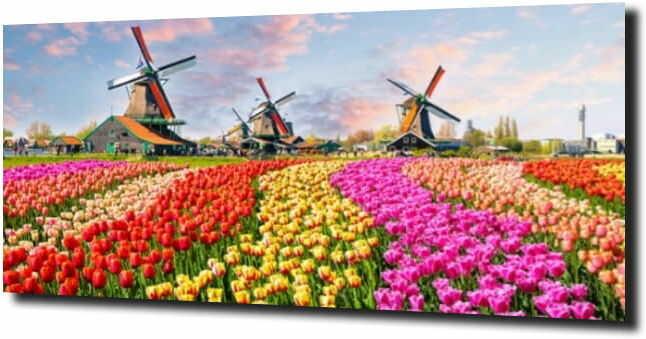 obraz na szkle, panel szklany Tulipany 15 120X60