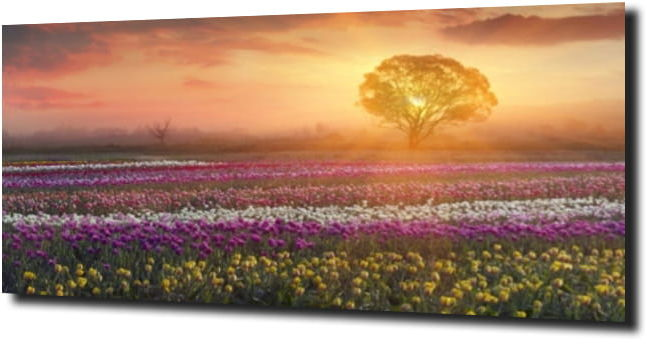 obraz na szkle, panel szklany Tulipany 16 125X50