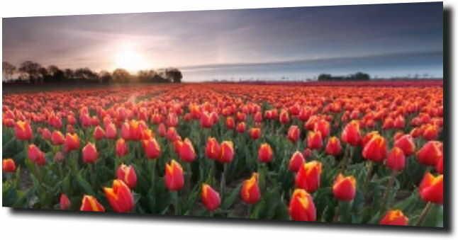 obraz na szkle, panel szklany Tulipany 20 120X60