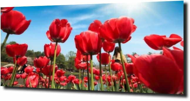 obraz na szkle, panel szklany Tulipany 23 120X60