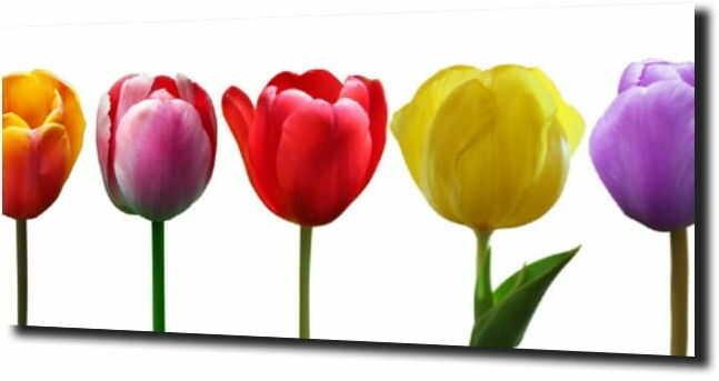 obraz na szkle, panel szklany Tulipany 28 120X60