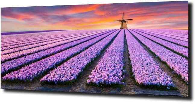 obraz na szkle, panel szklany Tulipany 30 125X50