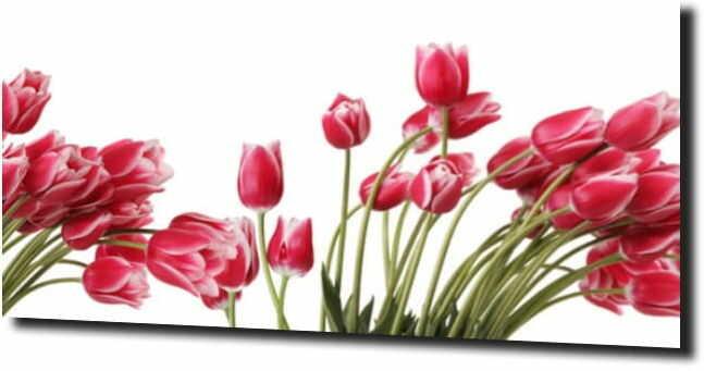 obraz na szkle, panel szklany Tulipany 32 125X50