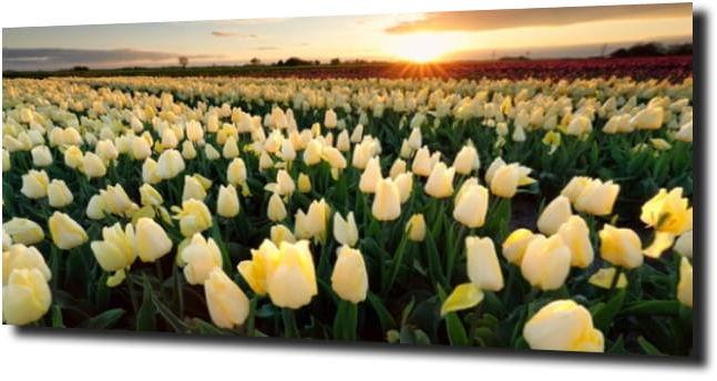 obraz na szkle, panel szklany Tulipany 34 120X60