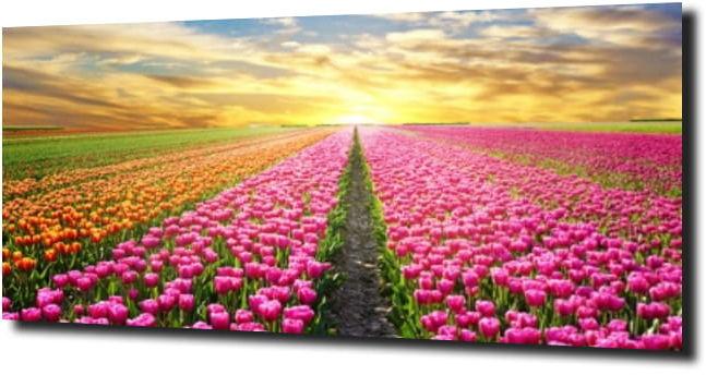 obraz na szkle, panel szklany Tulipany 35 120X60