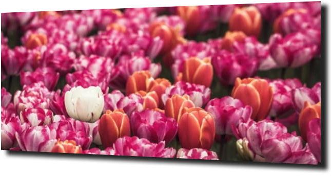 obraz na szkle, panel szklany Tulipany 41 125X50