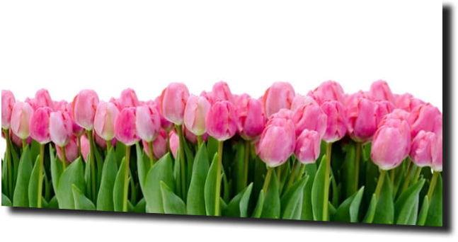 obraz na szkle, panel szklany Tulipany 46 125X50