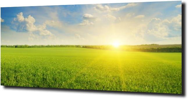 obraz na szkle Zielona łąka w letni dzień