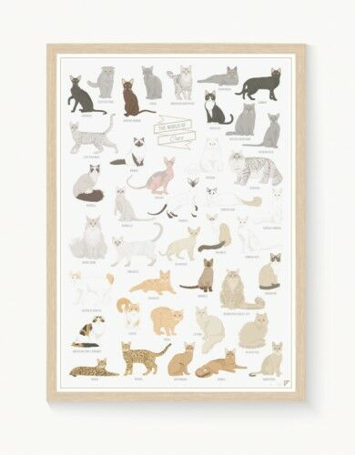"""Plakat """"The World of Cats"""""""