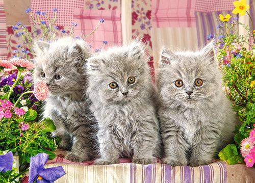 Puzzle Castor 260 - Trzy szare kotki, Three Grey Kittens