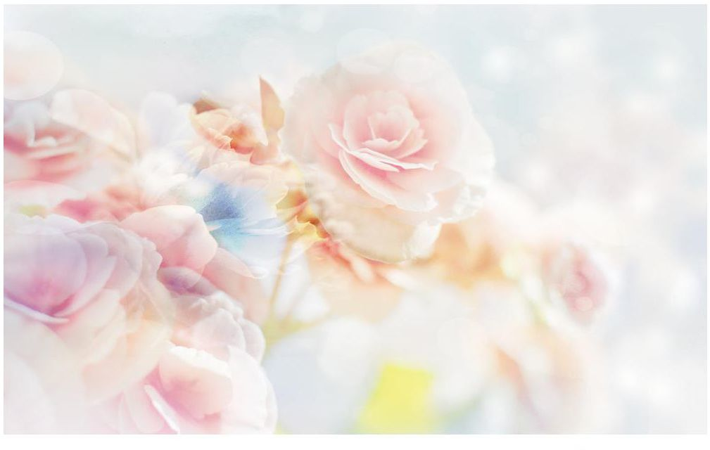 Fototapeta Róże 312 x 219 cm