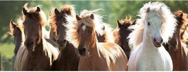 Puzzle Ravensburger 1000 - Dzikie konie, Wild horses
