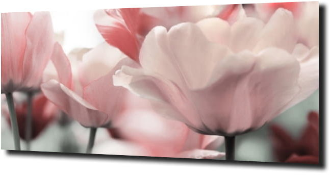 obraz na szkle, panel szklany Tulipany 2 125X50