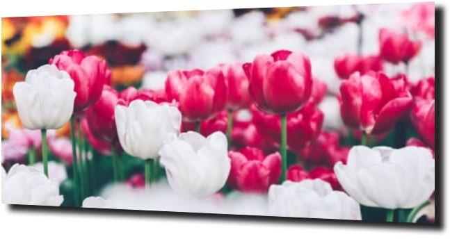 obraz na szkle, panel szklany Tulipany 5 125X50