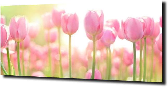 obraz na szkle, panel szklany Tulipany 6 125X50