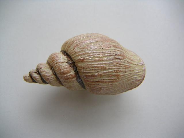 "Uchwyt gałka Owoce morza ""muszelka"""