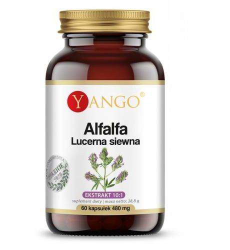 Alfalfa - Lucerna siewna 60 kaps Yango
