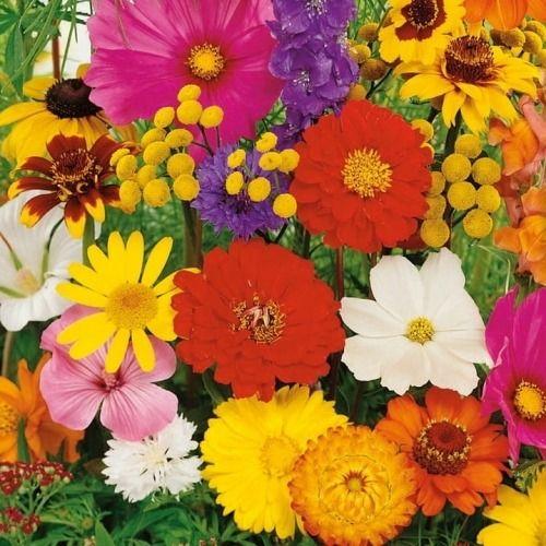 Kwiaty letnie  mix nasion  kiepenker