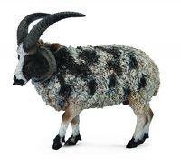 Owca wieloroga L - Collecta
