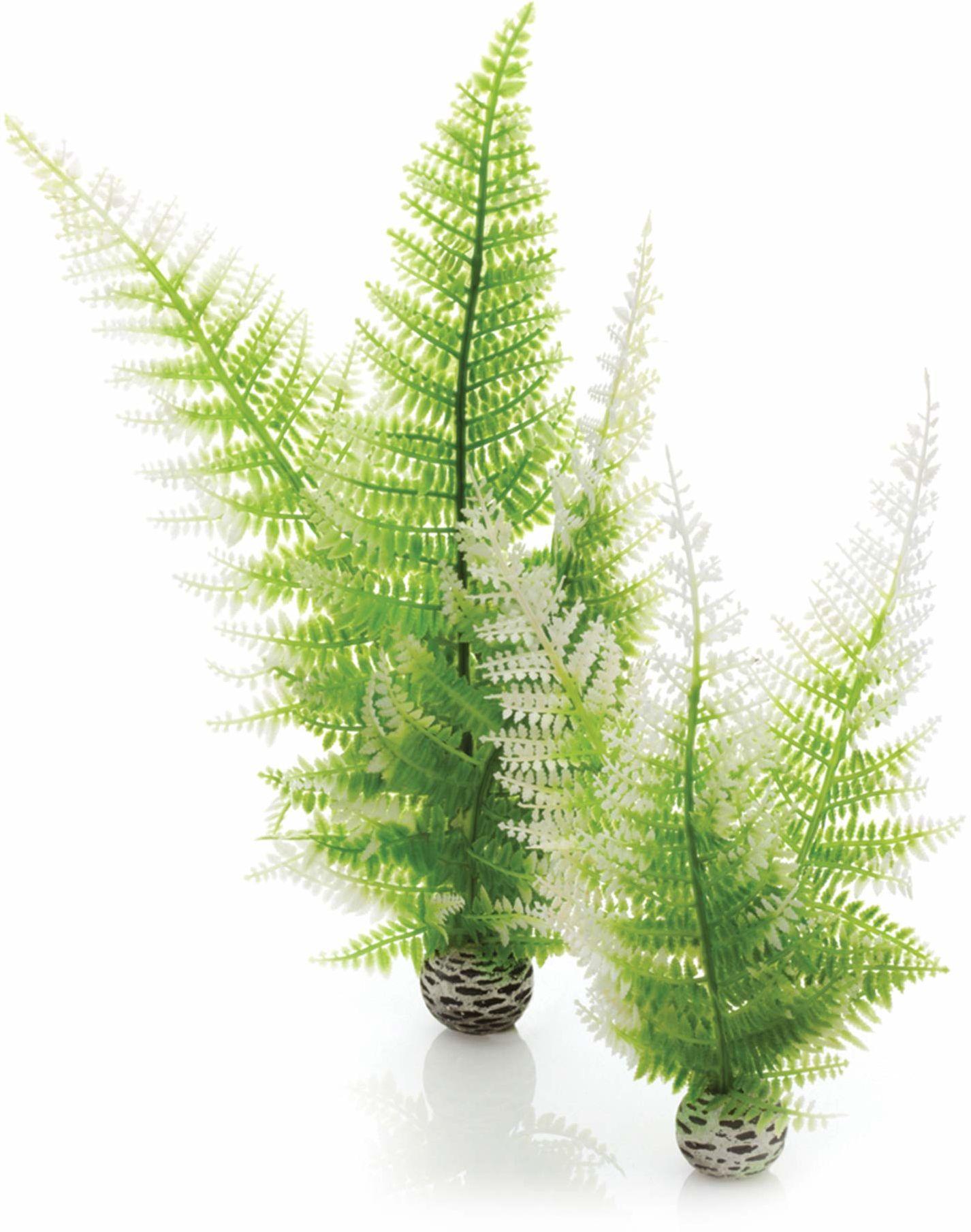 biOrb 46066 Paproć zimowa zestaw 2 rośliny akwariowe dekoracja akcesoria