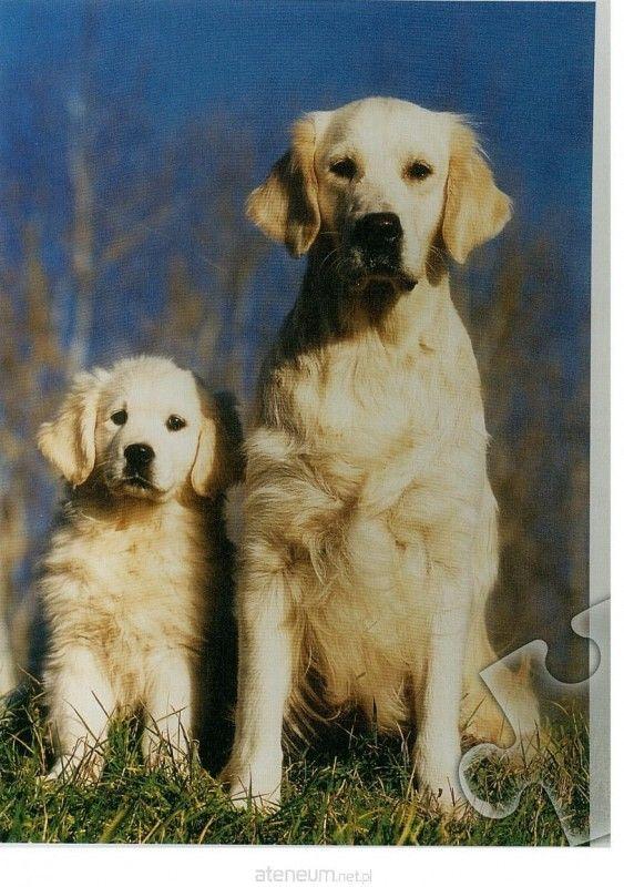 Puzzle TREFL 500 - Psy, Dogs