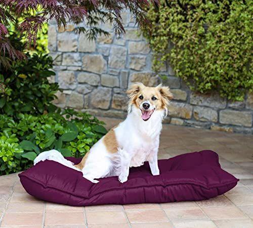 Pies Maxi poduszka 60 x 100 cm, śliwka