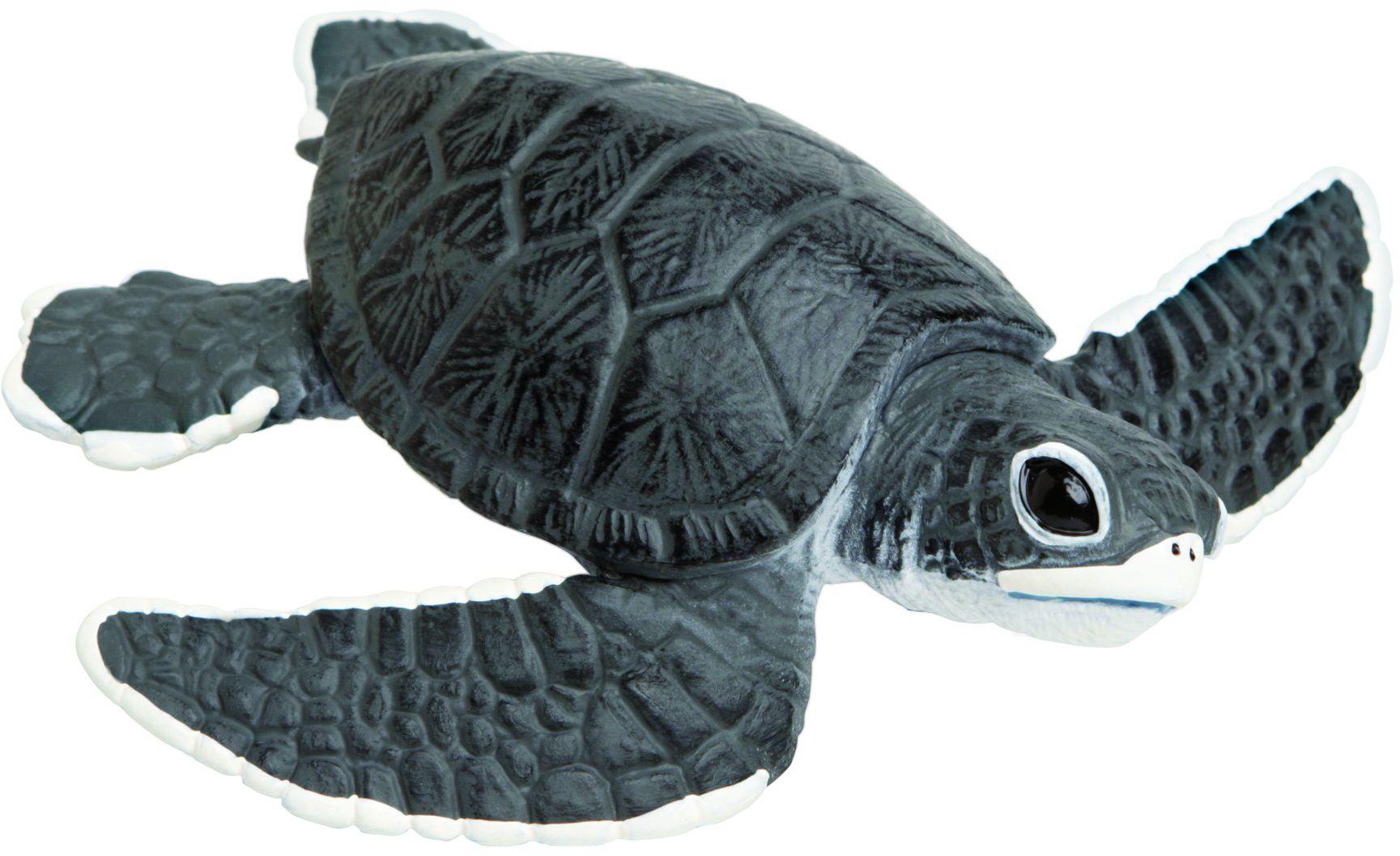 Dziecko żółwia morskiego