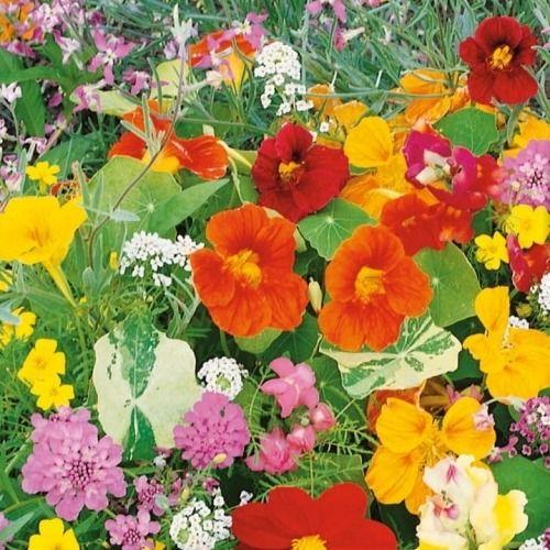 Kwiaty pachnące  jednoroczne mix  kiepenkerl