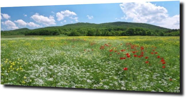 obraz na szkle Zielona kwiecista łąka