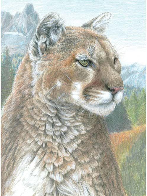 Zestaw kolorowych ołówków po numerach 21,75 cm x 29 cm  Cougar