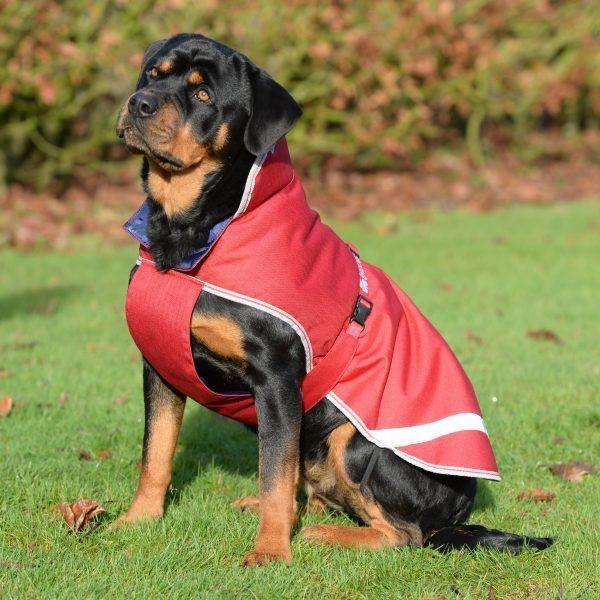 Derka dla psa 300g FREEDOM - Bucas - chili red