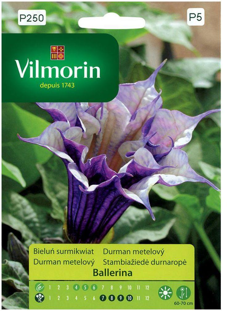 Bieluń surmikwiat BALERINA nasiona tradycyjne 5 szt. VILMORIN
