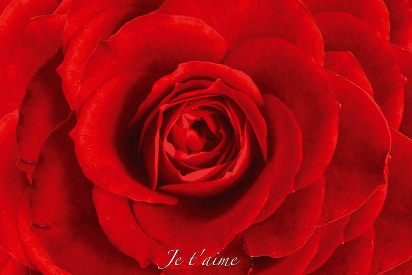 Czerwona róża - kocham cię po francusku - plakat