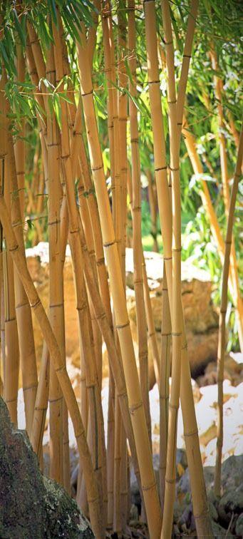 Las bambusowy - bamboo - fototapeta