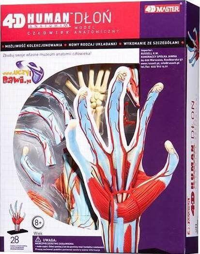 Anatomia człowieka - Dłoń RUS 26057
