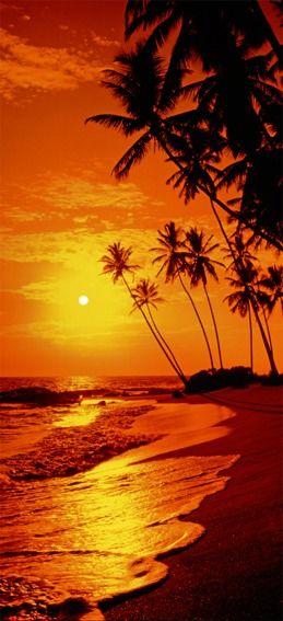 Zachód słońca - dzika plaża palmy - fototapeta