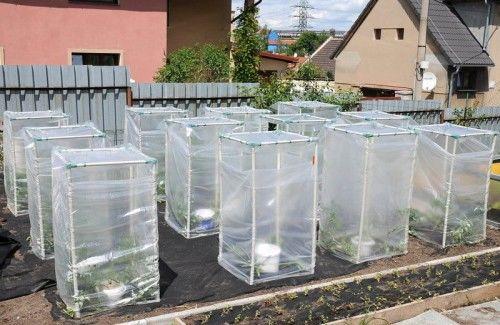 Szklarnia na pomidory 60x60x110cm, Cały zestaw