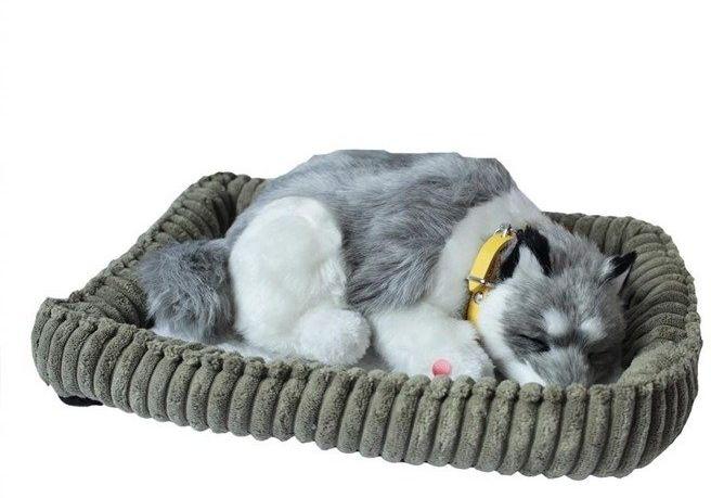 Śpiący pies na poduszce - Husky