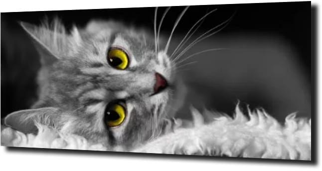 obraz na szkle Kot zielone oczy mały