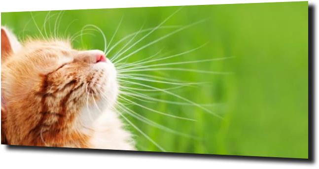 obraz na szkle Kot zielone tło kotek