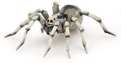 Papo 50190 Tarantula 9,8x9,5x2,2cm