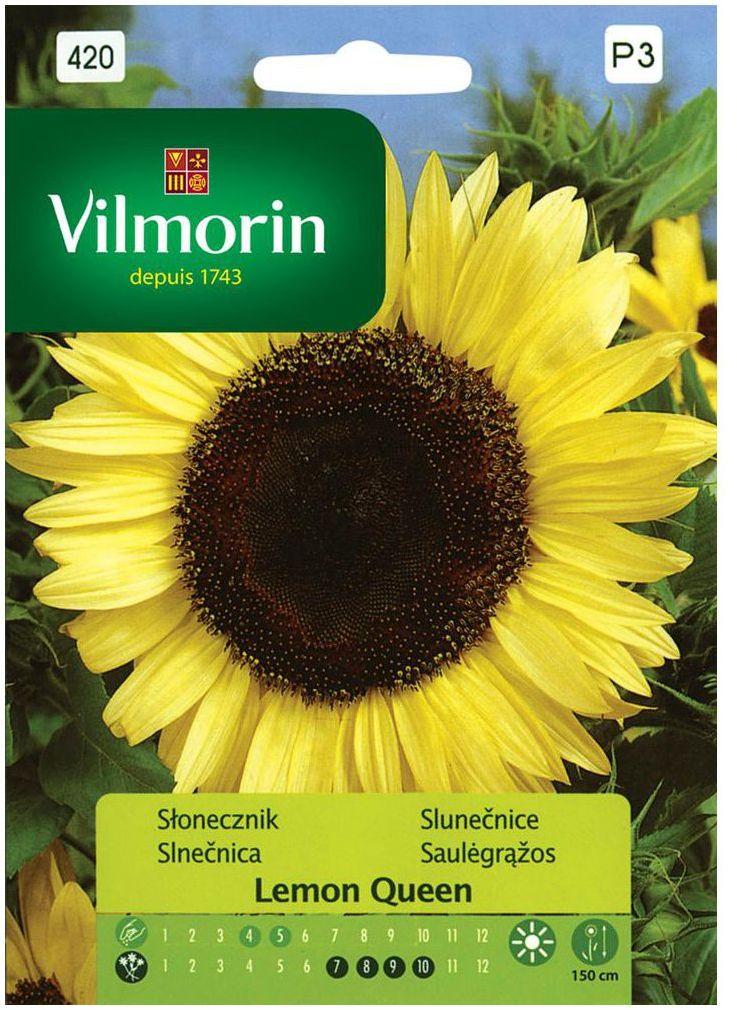 Słonecznik zwyczajny LEMON QUEEN nasiona tradycyjne 0.5 g VILMORIN