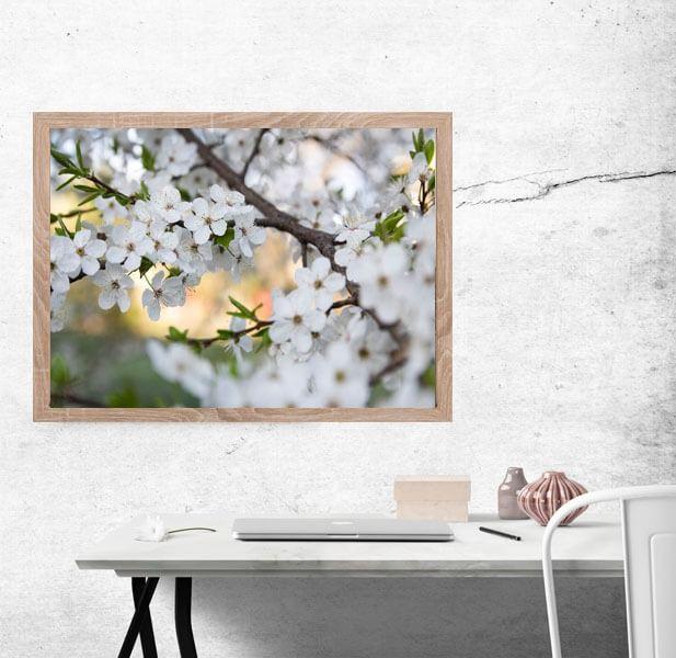 Wiosenne kwiaty czereśni - plakat premium wymiar do wyboru: 70x50 cm