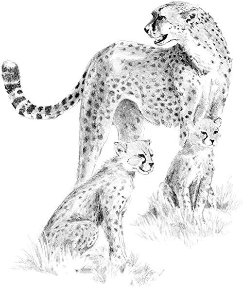 Łatwy zestaw do szkicowania 23 cm x 30 cm - Gepard i Cub