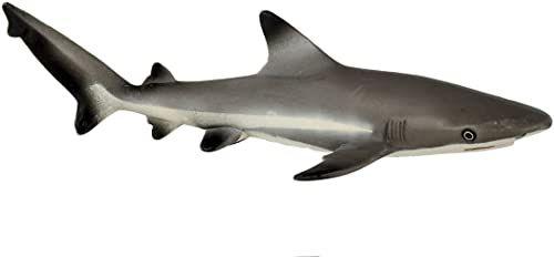 Safari Reef Reef Shark