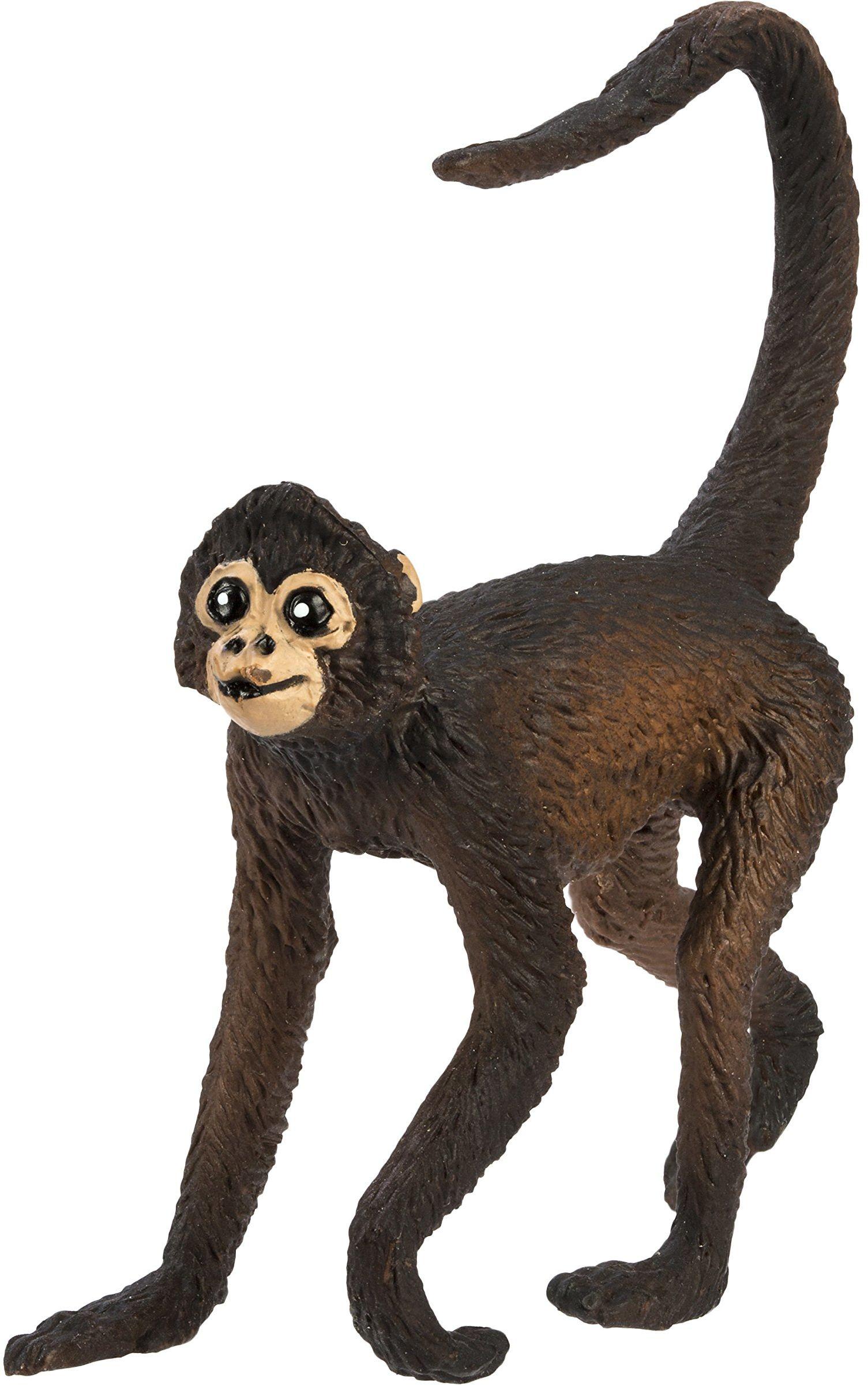 Safari Pająk małpa