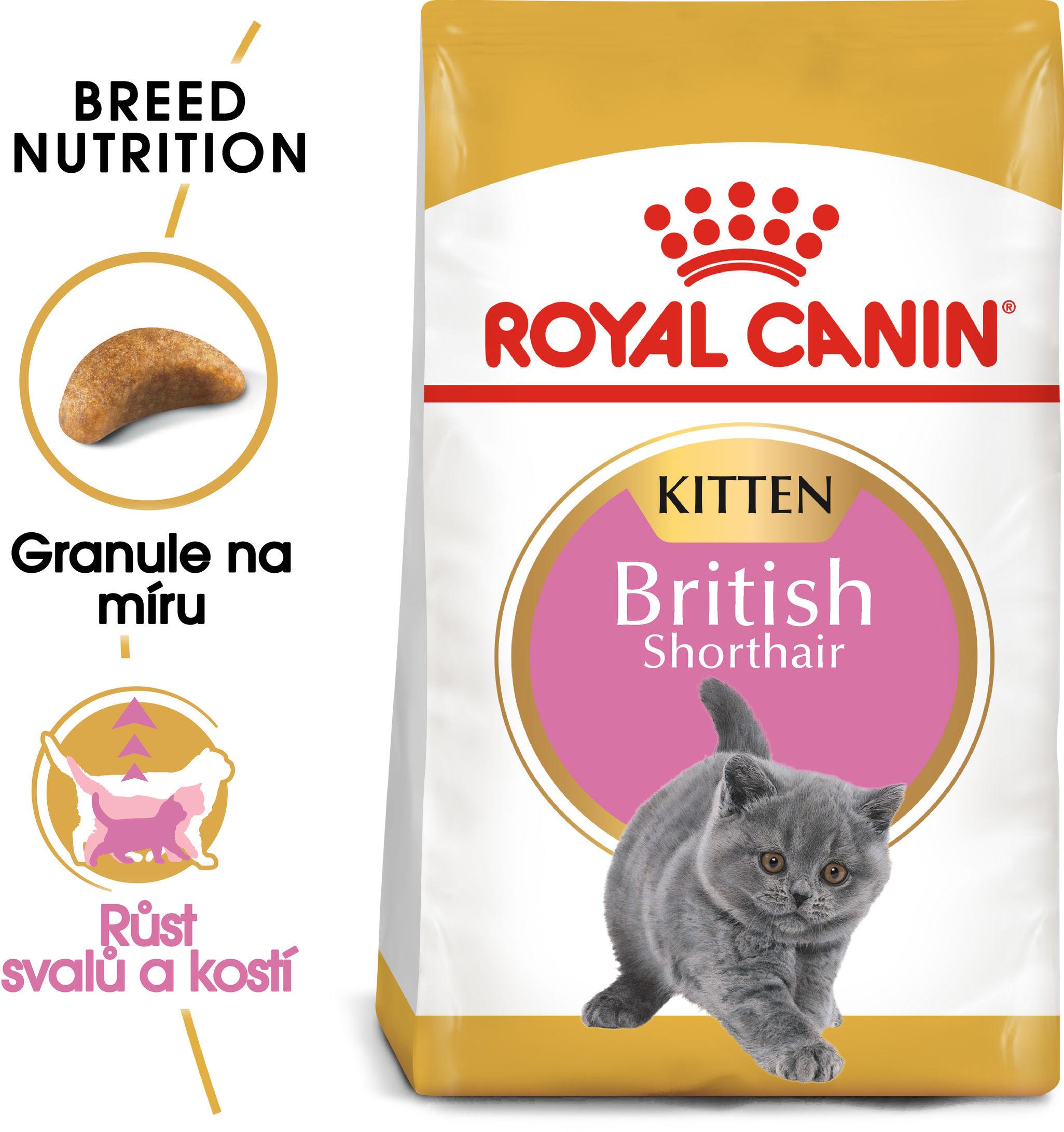 RC cat KITTEN BRITISH shorthair