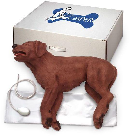 CASPER CPR - Fantom psa