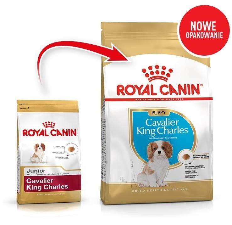 ROYAL CANIN Cavalier King Charles Spaniel Puppy 1,5kg karma sucha dla szczeniąt do 10 miesiąca, rasy cavalier king charles spaniel