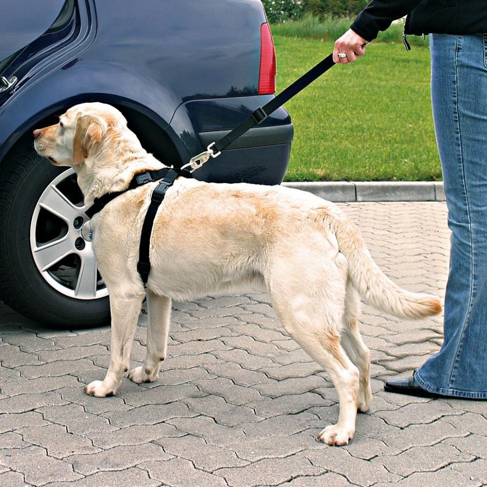 Pasy bezpieczeństwa dla psa z szelkami (trixie)